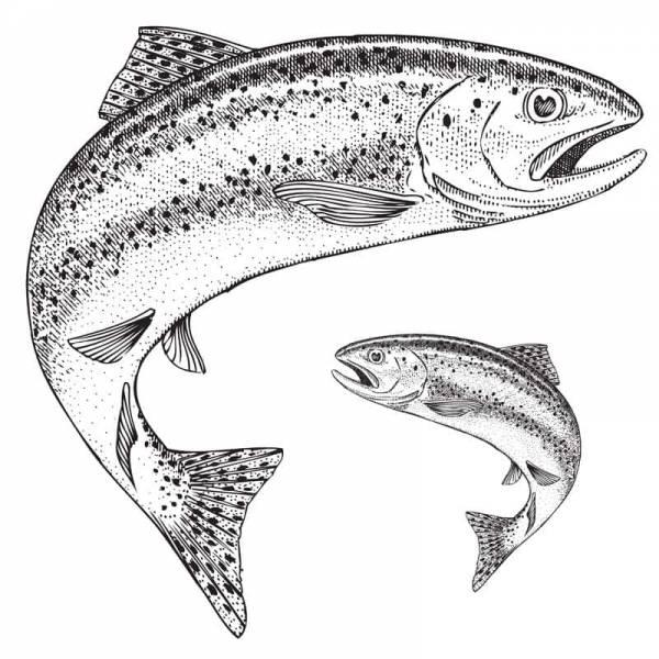 Holbury Lakes Two Fish Ticket
