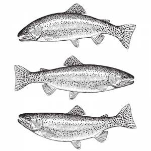 Holbury Lakes Three Fish Ticket