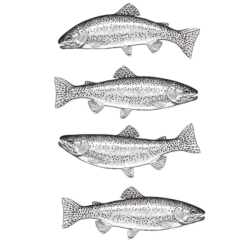 Holbury Lakes Four Fish Ticket