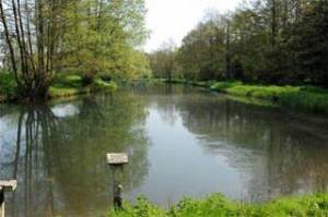 Holbury Lakes - Long Lake 2