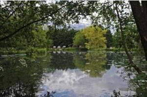 Holbury Lakes - The Pond 2